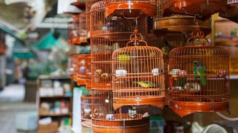 Bird trade market